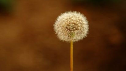 Daffodil circle pixabay