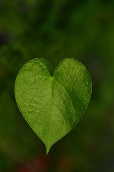 Leaf heart pixabay