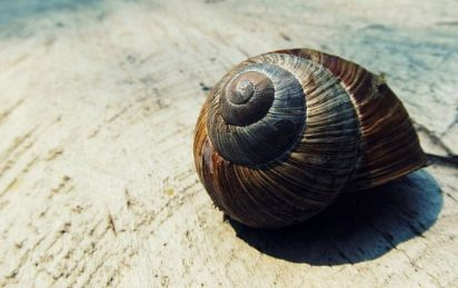 Snail shell spiral pixabay